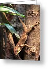 Lizard On The Tree Greeting Card