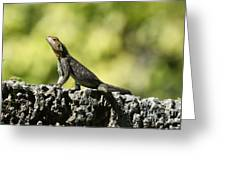 Lizard On The Wall Greeting Card