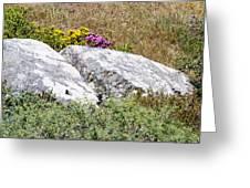 Lizard Protected Granite Boulders Greeting Card