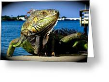 Lizard Sunbathing In Miami Greeting Card