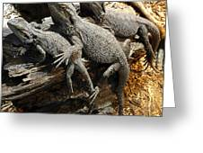 Lizards Greeting Card by Les Cunliffe