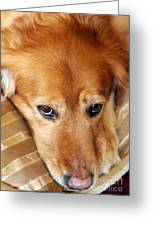 Lizzy Golden Retriever Greeting Card