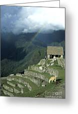 Llama And Rainbow At Machu Picchu Greeting Card by James Brunker