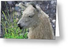 Llama Greeting Card by Jack Zulli