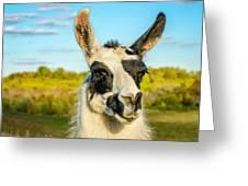 Llama Portrait Greeting Card