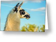 Llama Profile Greeting Card