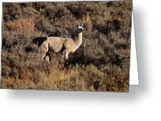 Llama Greeting Card