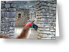 Llama Touring Machu Picchu Greeting Card