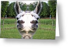 Llama  Fun Head Games Greeting Card