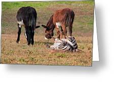Lmao  Mules And Zebra - Featured In Wildlife Group Greeting Card