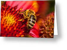 Loads Of Bee Pollen Greeting Card