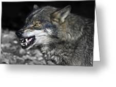 Lobo Greeting Card