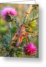 Locust And Thistle 2am-110423 Greeting Card