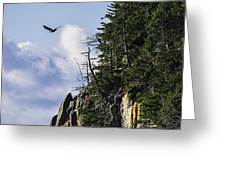 Lofty Bald Eagle Surveys Maines Bold Coast Greeting Card