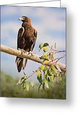 Lofty Visions - Wedge-tailed Eagle Greeting Card