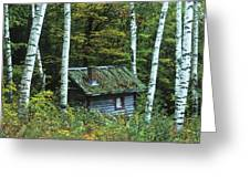 Log Cabin In The Birch Forest Vermont Greeting Card