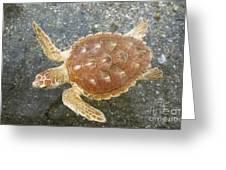 Loggerhead Turtle Greeting Card