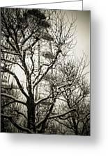 London Eye Through Snowy Trees Greeting Card