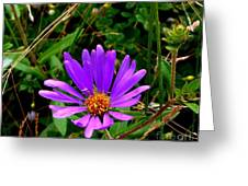 Lone Aster Greeting Card