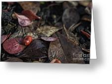 Lone Berry Greeting Card