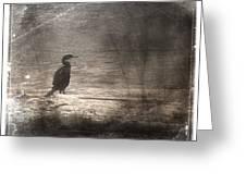 Lone Cormorant Greeting Card