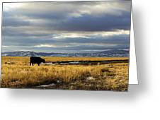 Lone Cow Against A Stormy Montana Sky. Greeting Card