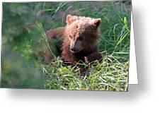 Lone Cub Greeting Card