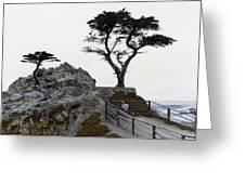 Lone Cypress 1970 Greeting Card