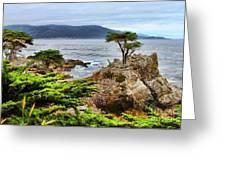 Lone Cypress By Diana Sainz Greeting Card