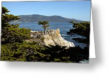 Lone Cypress On 17-mile Drive  Greeting Card