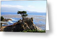 Lone Cypress Tree In Monterey In California Greeting Card