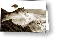 Lone Cypress Tree On  Midway Point Pebble Beach California Circa 1916 Greeting Card