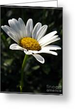 Lone Daisy Greeting Card