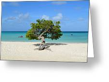 Lone Divi Tree In Aruba Greeting Card