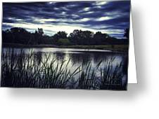 Lone Duck At Dusk Greeting Card