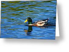 Lone Duck Greeting Card