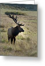 Lone Elk Greeting Card