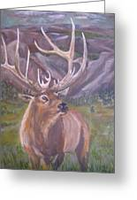 Lone Elk Greeting Card by Caroline Owen-Doar