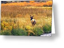 Lone Elk. Greeting Card