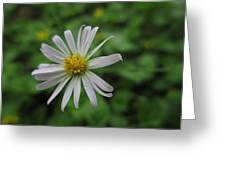 Lone Flower Greeting Card