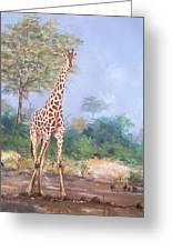 Lone Giraffe Greeting Card