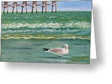 Lone Gull A-piers Greeting Card