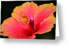 Lone Hibiscus Greeting Card