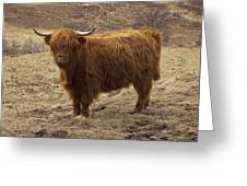 Lone Highland Cow Greeting Card