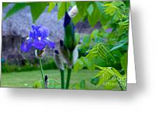 Lone Iris Greeting Card