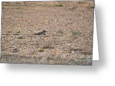 Lone Killdeer Greeting Card