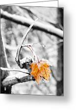 Lone Leaf Greeting Card