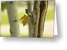 Lone Leaf Greeting Card