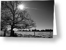 Lone Live Oak Bw Greeting Card