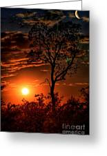 Lone Manzanita Sunset Greeting Card